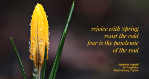 Rejoice with Spring