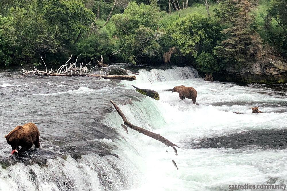 alaska, grizzly bears, sacred fire